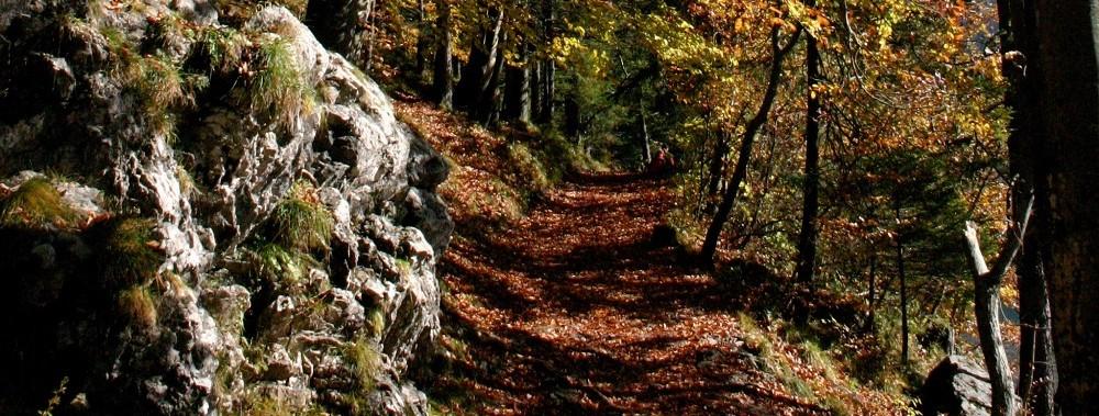 Herbst-Wrnschiml-3