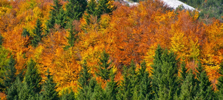 Herbst-Wrnschiml